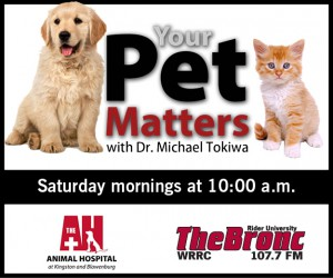your-pets-matters-banners-20133-300x250